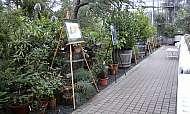 praga-prima-vystava-obrazu-botanicka-zahrada-02-