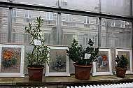 praga-prima-vystava-obrazu-botanicka-zahrada-07-